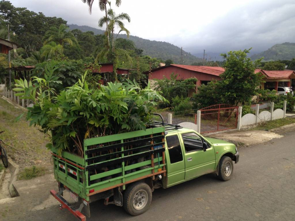 delivering plants